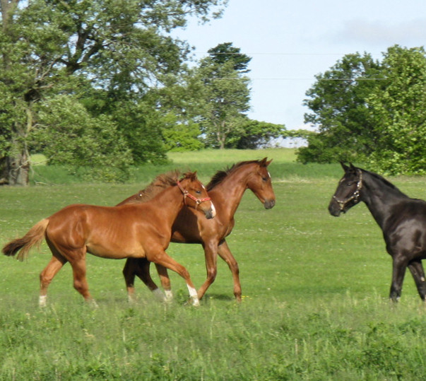 Yearlings_June2011.jpg