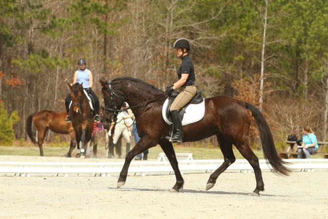 FenRidgeDressage_2314-1753921699-O.jpg