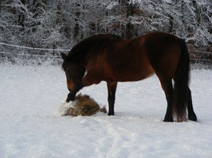 horses and first snow Dec 2016 025a.jpg