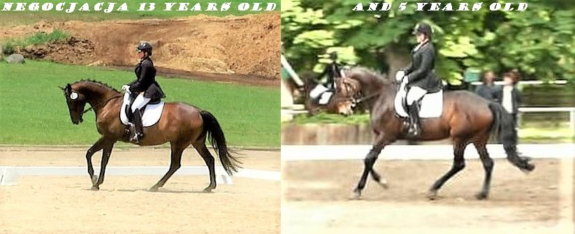 Comparison - canter.jpg