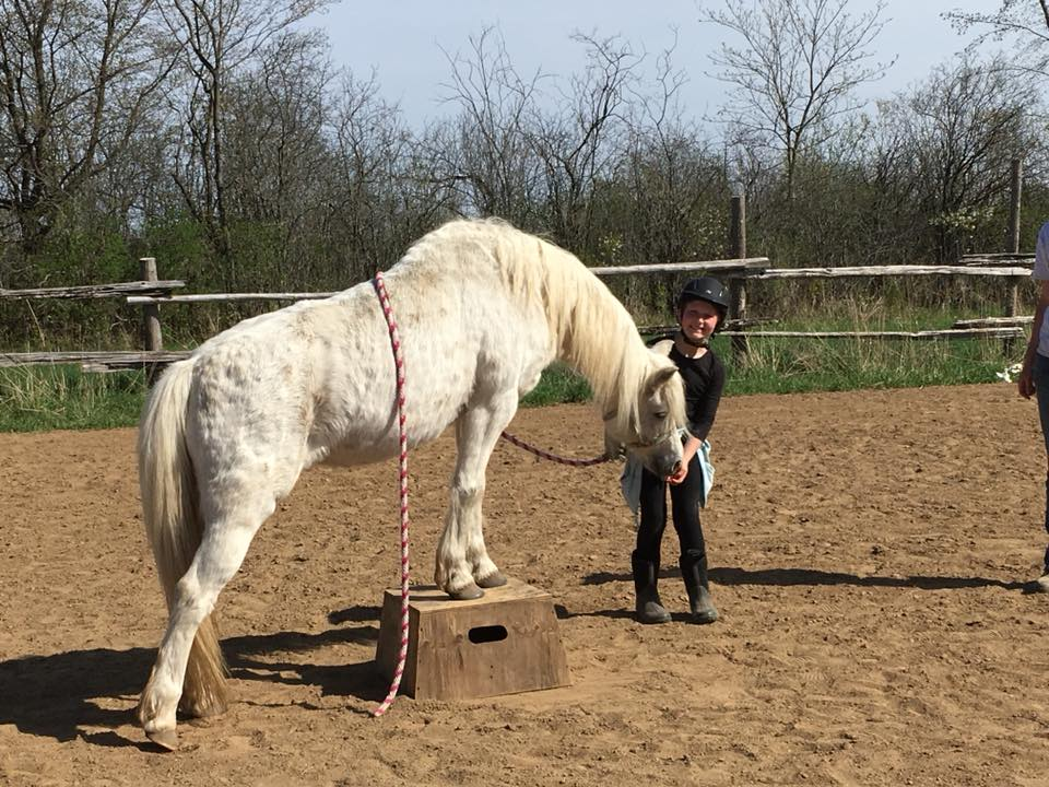 2018May12 TrickHorseClinic_Sera1.jpg
