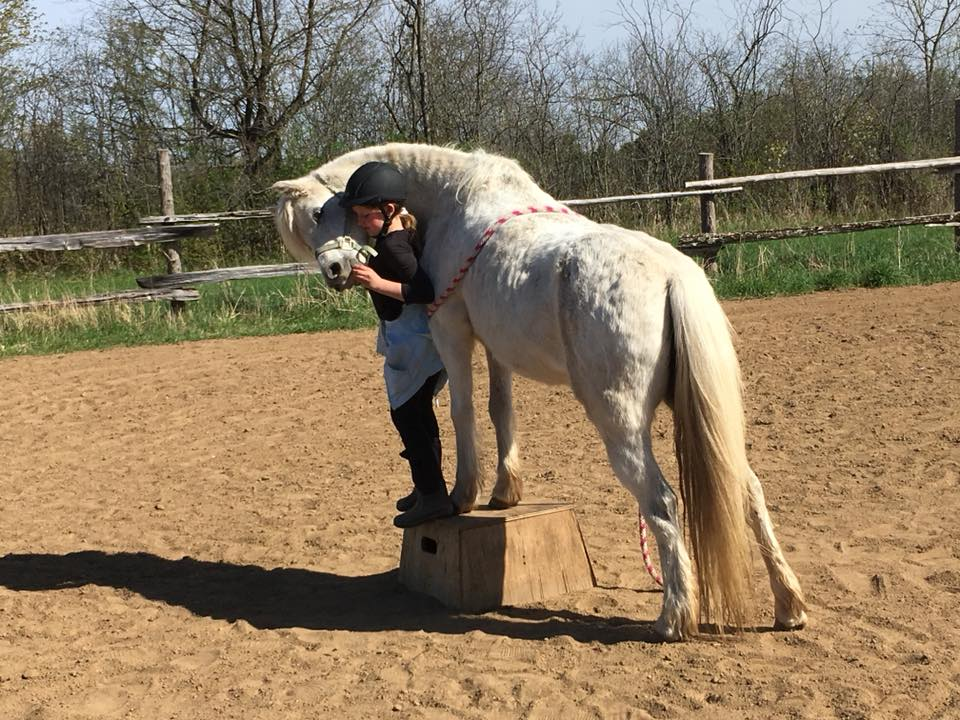 2018May12 TrickHorseClinic_Sera3.jpg