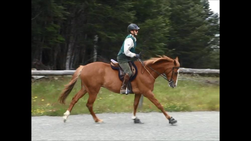 5.canter-right2-sml.jpg